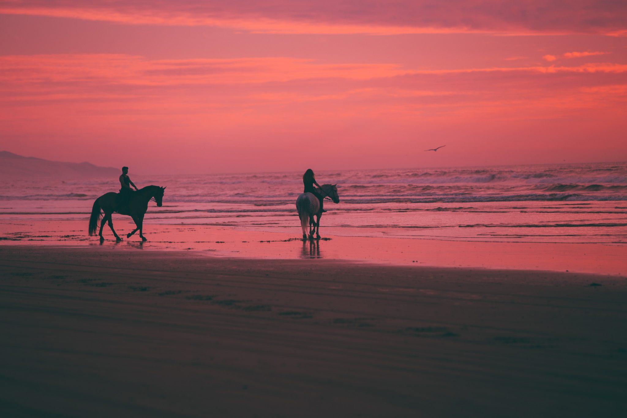 Hoe kun je een warm paard het beste laten afkoelen?