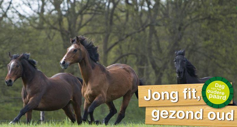 Voeding voor oudere paarden