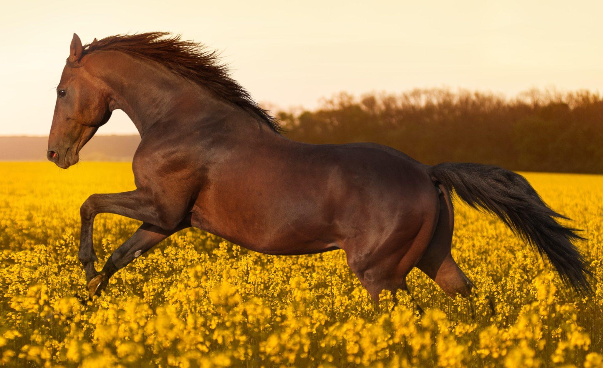 Train én voer je paard een sixpack