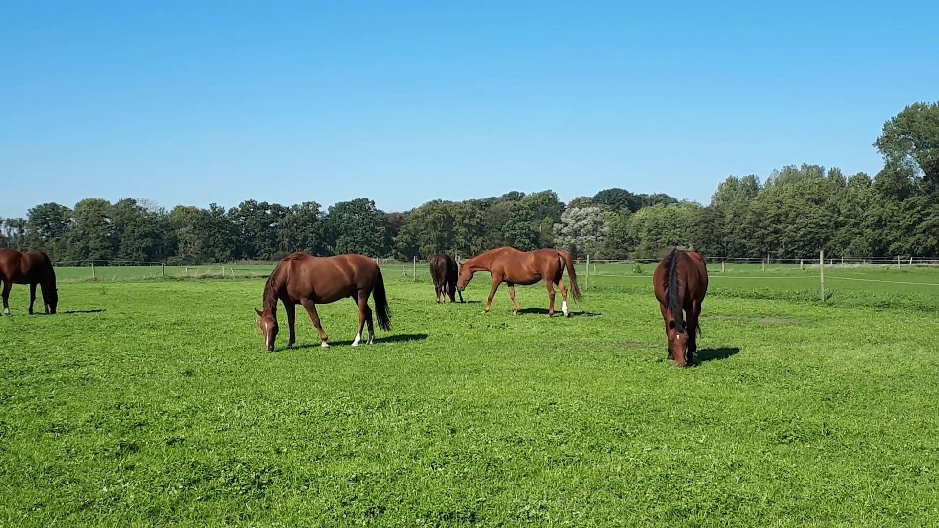 Gezondheidsrisico's voor paarden tijdens de herfst
