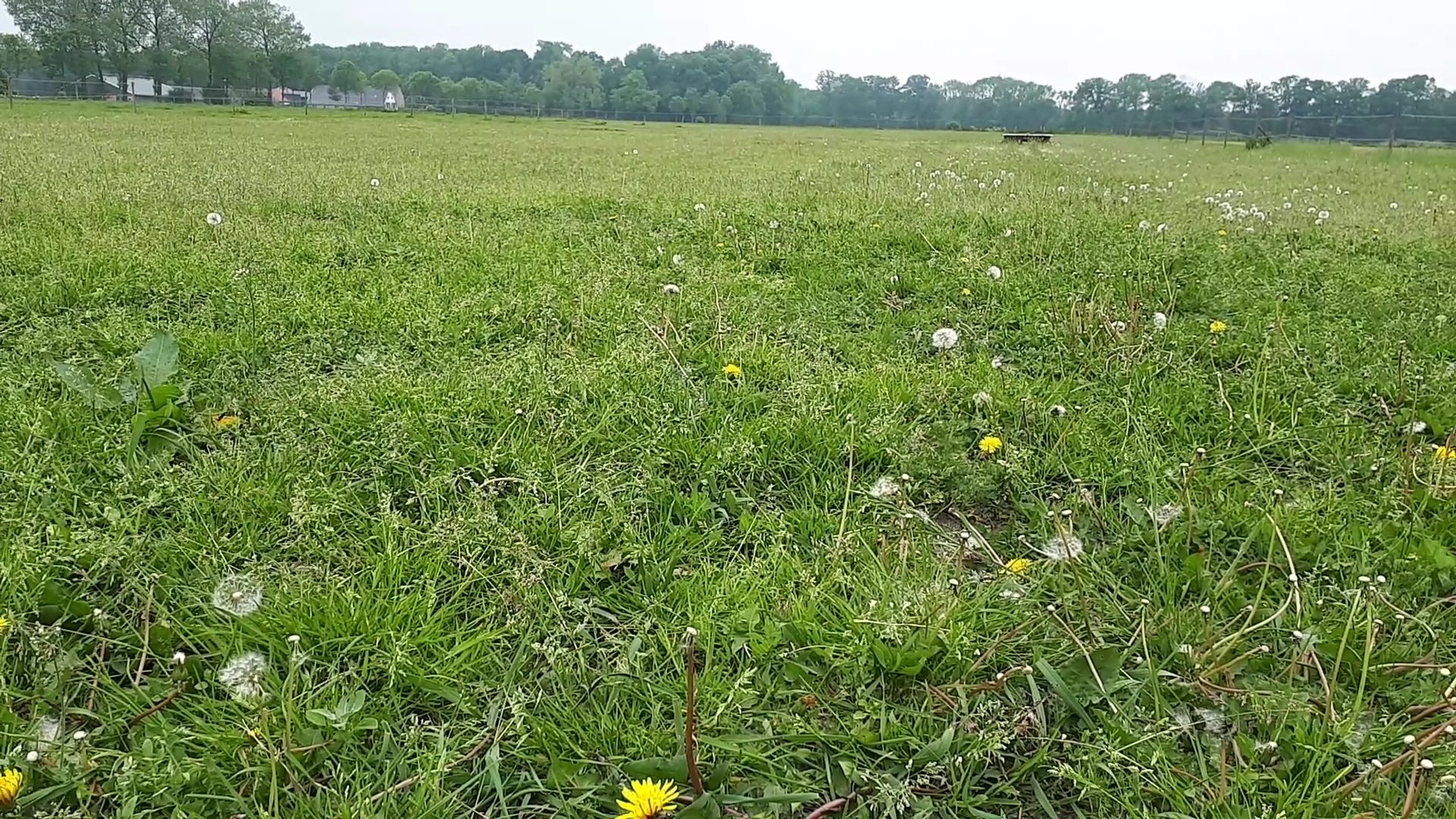 Wat groeit er in het weiland?