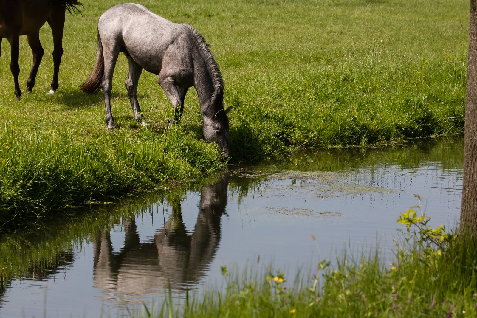 Wat is de waterbehoefte van een paard?